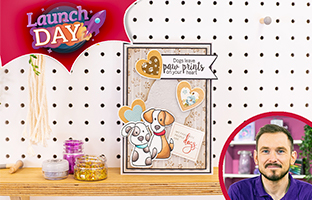 Launch Day - 15th Feb - NEW Nitwit Pawsitivity