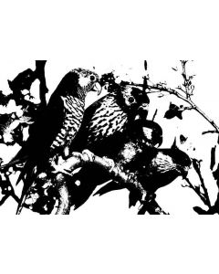 Imagination Crafts Art Stamps - Parrots
