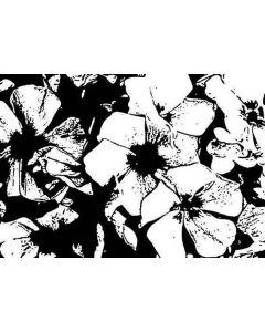 Imagination Crafts Art Stamps 135x91 - Anemones